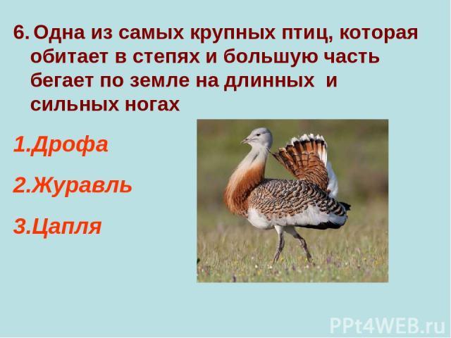 6. Одна из самых крупных птиц, которая обитает в степях и большую часть бегает по земле на длинных и сильных ногах Дрофа Журавль Цапля