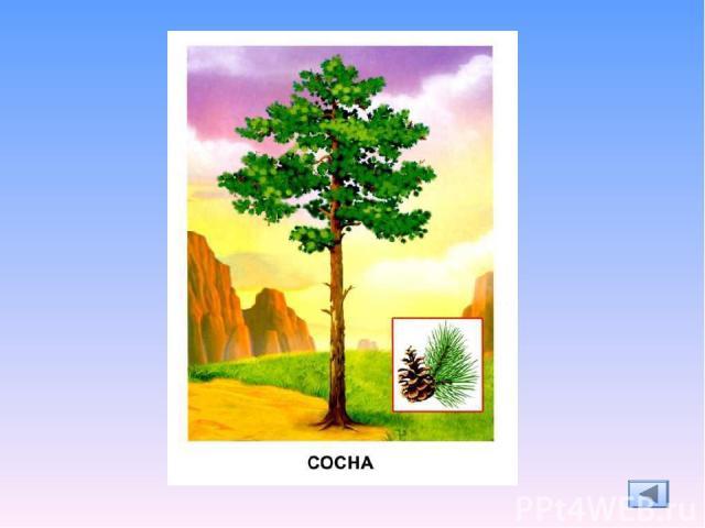 Ресурсы: http://feodosia.net/wallpaper/4042/download/ -пейзаж http://lenagold.narod.ru/fon/clipart/d/der/derev146.png -дерево http://vglib.ru/modules/myalbum/photo.php?lid=1863 – векторный клипарт дерево http://littlhuman.ru/717/ - загадки о деревья…
