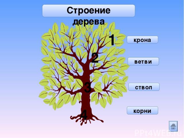 6+4 3+7 5+5 9+1 5+4 7+2 8+2 Помоги ежику собрать спелые яблоки так, чтобы сумма чисел равна 10 . Спасибо!
