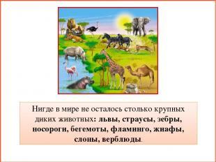Нигде в мире не осталось столько крупных диких животных: львы, страусы, зебры, н