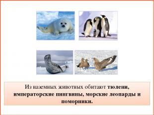 Из наземных животных обитают тюлени, императорские пингвины, морские леопарды и