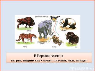 В Евразии водятся тигры, индийские слоны, питоны, яки, панды.