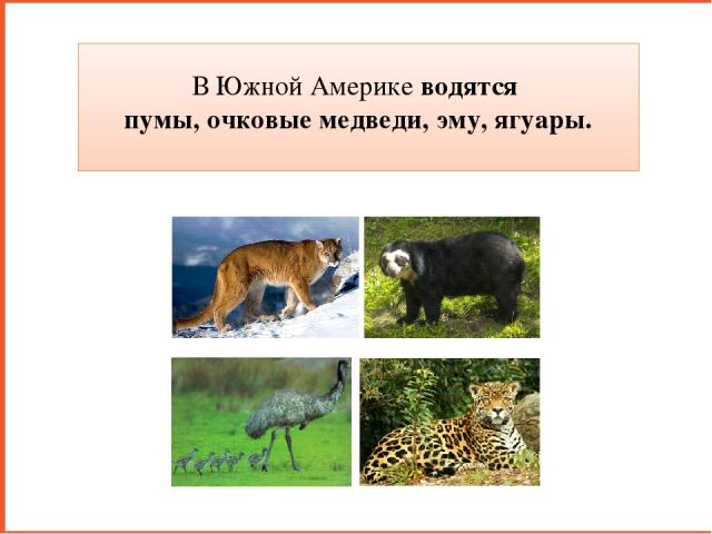 В Южной Америке водятся пумы, очковые медведи, эму, ягуары.
