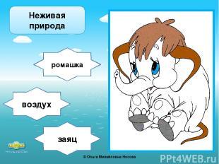 заяц ромашка воздух Неживая природа ©Ольга Михайловна Носова