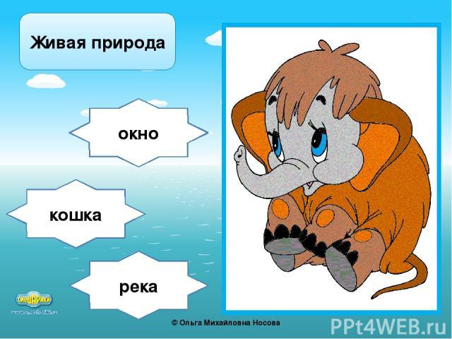 река окно кошка Живая природа ©Ольга Михайловна Носова