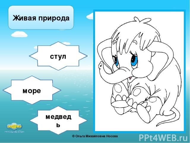 медведь стул море Живая природа ©Ольга Михайловна Носова