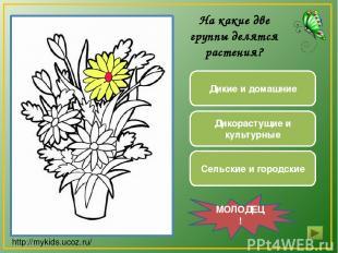 Дикие и домашние Дикорастущие и культурные Сельские и городские МОЛОДЕЦ! На каки
