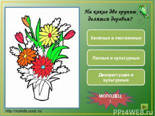 Дикорастущие и культурные Хвойные и лиственные Лесные и культурные МОЛОДЕЦ! На к