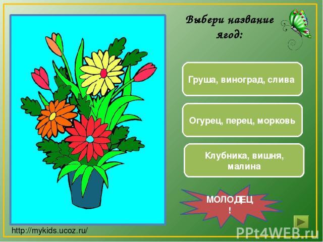 Груша, виноград, слива Клубника, вишня, малина Огурец, перец, морковь МОЛОДЕЦ! Выбери название ягод: http://mykids.ucoz.ru/