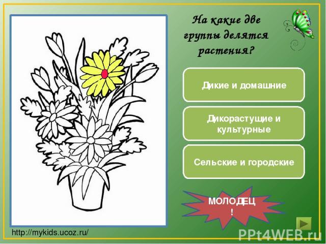 Дикие и домашние Дикорастущие и культурные Сельские и городские МОЛОДЕЦ! На какие две группы делятся растения? http://mykids.ucoz.ru/