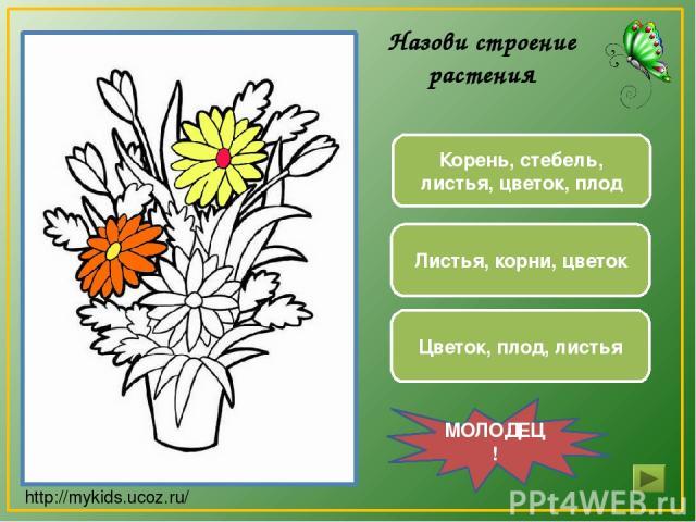 Листья, корни, цветок Корень, стебель, листья, цветок, плод Цветок, плод, листья МОЛОДЕЦ! Назови строение растения http://mykids.ucoz.ru/