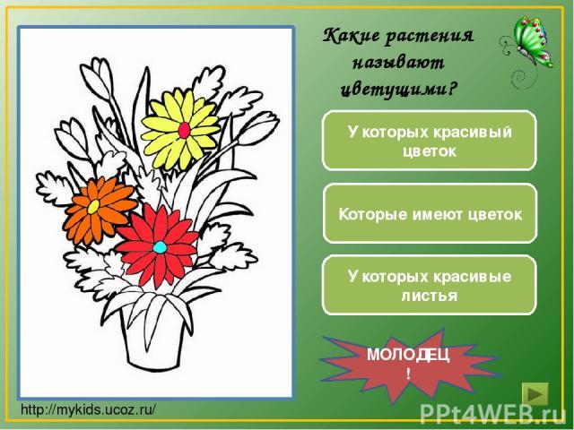 У которых красивый цветок Которые имеют цветок У которых красивые листья МОЛОДЕЦ! Какие растения называют цветущими? http://mykids.ucoz.ru/
