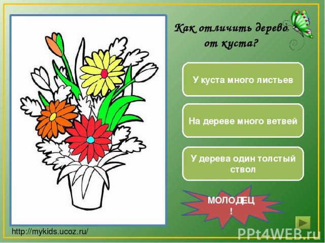 У куста много листьев У дерева один толстый ствол На дереве много ветвей МОЛОДЕЦ! Как отличить дерево от куста? http://mykids.ucoz.ru/