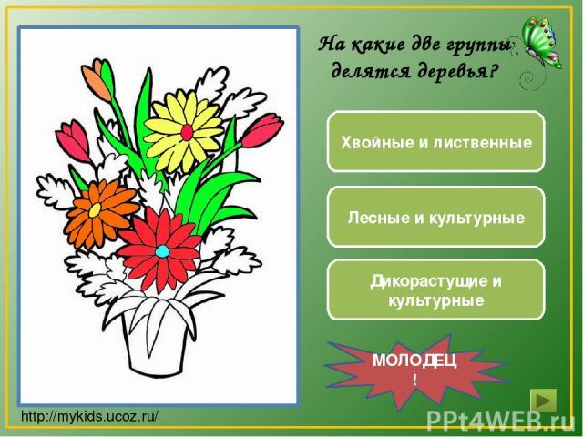 Дикорастущие и культурные Хвойные и лиственные Лесные и культурные МОЛОДЕЦ! На какие две группы делятся деревья? http://mykids.ucoz.ru/