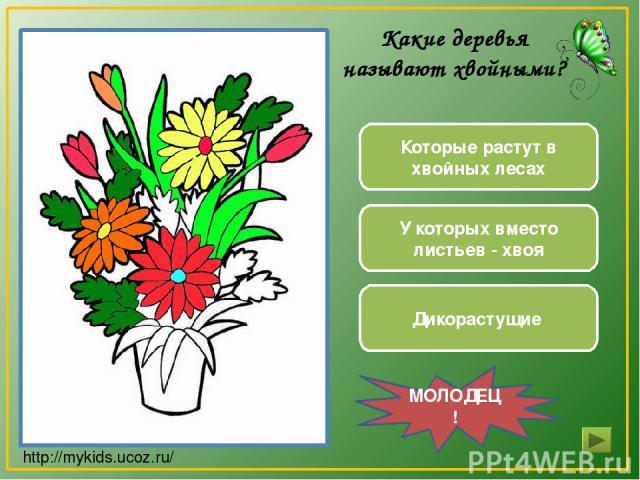 Дикорастущие У которых вместо листьев - хвоя Которые растут в хвойных лесах МОЛОДЕЦ! Какие деревья называют хвойными? http://mykids.ucoz.ru/