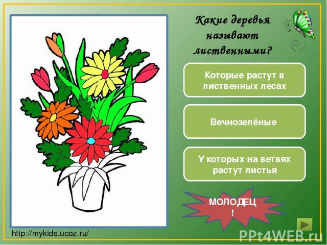 Вечнозелёные У которых на ветвях растут листья Которые растут в лиственных лесах МОЛОДЕЦ! Какие деревья называют лиственными? http://mykids.ucoz.ru/