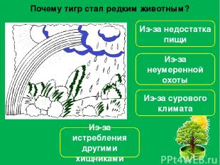 Какое растение является лекарственным? Волчье лыко Ветреница Пижма Купальница