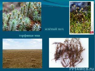 зелёный мох торфяные мхи