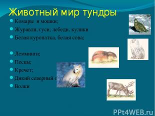Животный мир тундры Комары и мошки; Журавли, гуси, лебеди, кулики Белая куропатк