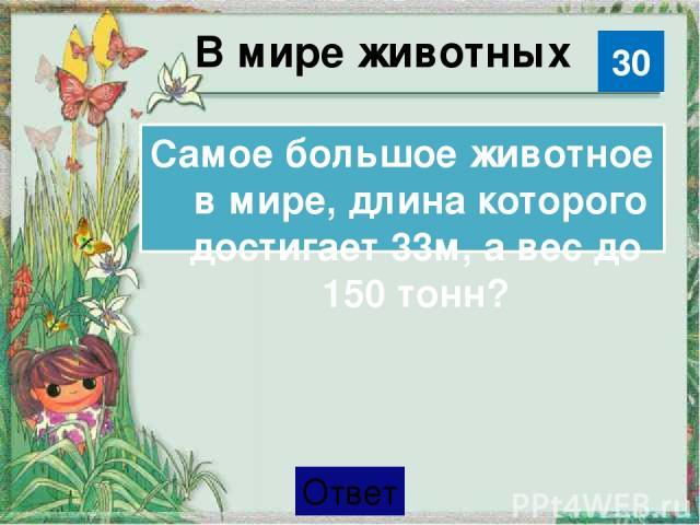 В мире животных Синий кит 30 Категория Ваш ответ