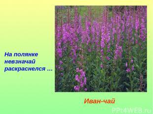 На полянке невзначай раскраснелся… Иван-чай
