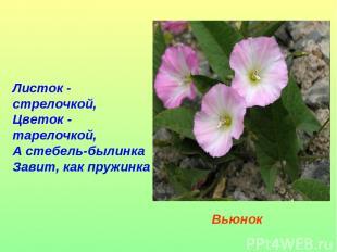 Листок - стрелочкой, Цветок - тарелочкой, А стебель-былинка Завит, как пружинка