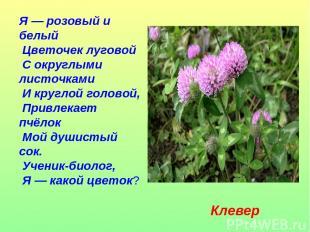 Я — розовый и белый Цветочек луговой С округлыми листочками И круглой головой, П