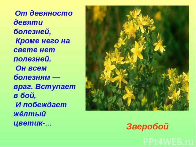 От девяносто девяти болезней, Кроме него на свете нет полезней. Он всем болезням — враг. Вступает в бой, И побеждает жёлтый цветик-... Зверобой