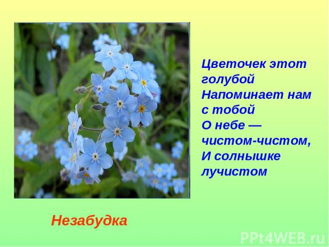 Цветочек этот голубой Напоминает нам с тобой О небе — чистом-чистом, И солнышке лучистом Незабудка