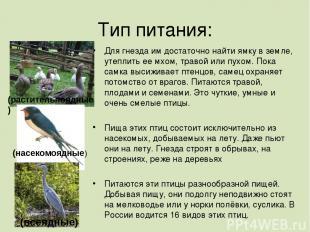 Тип питания: Для гнезда им достаточно найти ямку в земле, утеплить ее мхом, трав