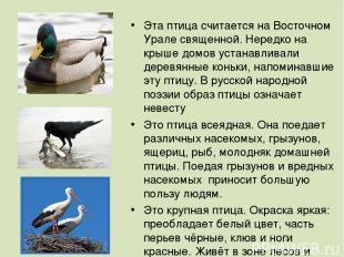 Эта птица считается на Восточном Урале священной. Нередко на крыше домов устанав