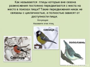 Как называются птицы которые вне сезона размножения постоянно передвигаются с ме