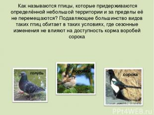 Как называются птицы, которые придерживаются определённой небольшой территории и