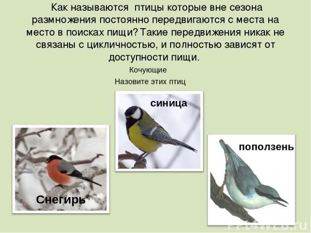Как называются птицы которые вне сезона размножения постоянно передвигаются с места на место в поисках пищи? Такие передвижения никак не связаны с цикличностью, и полностью зависят от доступности пищи. Снегирь синица . поползень Кочующие Назовите эт…