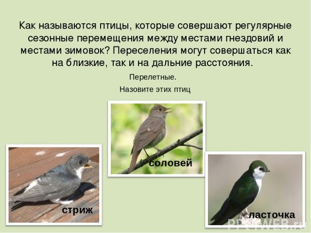 Как называются птицы, которые совершают регулярные сезонные перемещения между местами гнездовий и местами зимовок? Переселения могут совершаться как на близкие, так и на дальние расстояния. стриж соловей ласточка Перелетные. Назовите этих птиц