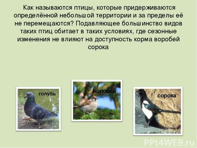 Как называются птицы, которые придерживаются определённой небольшой территории и за пределы её не перемещаются? Подавляющее большинство видов таких птиц обитает в таких условиях, где сезонные изменения не влияют на доступность кормаворобей сорока г…