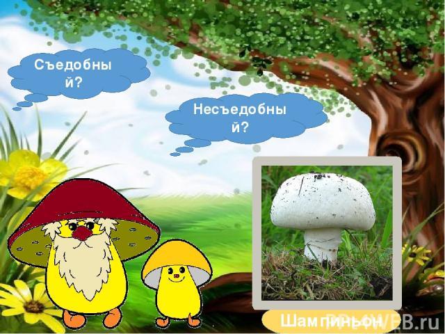 """Тренажёр-раскраска """"Съедобные и несъедобные грибы ..."""