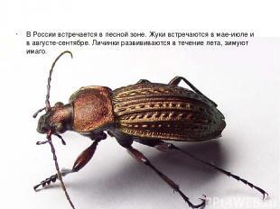 В России встречается в лесной зоне. Жуки встречаются в мае-июле и в августе-сент