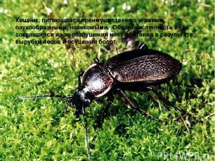 Хищник, питающийся преимущественно червями, паукообразными, насекомыми. Общая ч