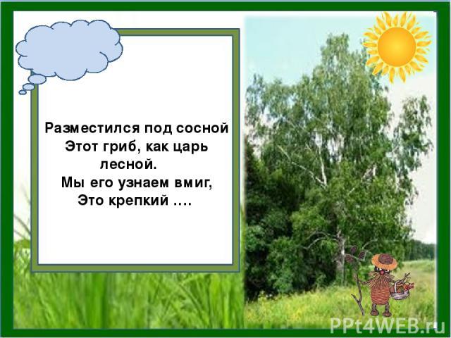 Разместился под сосной Этот гриб, как царь лесной. Мы его узнаем вмиг, Это крепкий ….