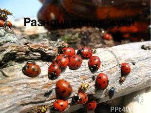 Разноцветные жуки