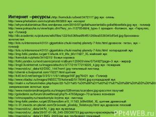 Интернет –ресурсы. http://kemclub.ru/best/3472117.jpg жук -олень http://www.phot
