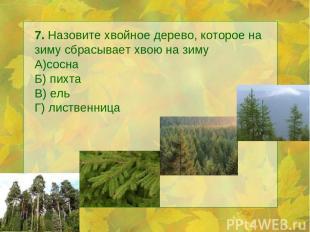 7. Назовите хвойное дерево, которое на зиму сбрасывает хвою на зиму А)сосна Б) п
