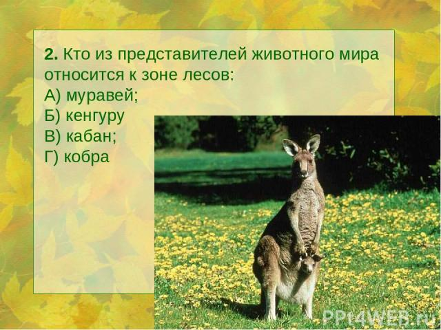 2. Кто из представителей животного мира относится к зоне лесов: А) муравей; Б) кенгуру В) кабан; Г) кобра