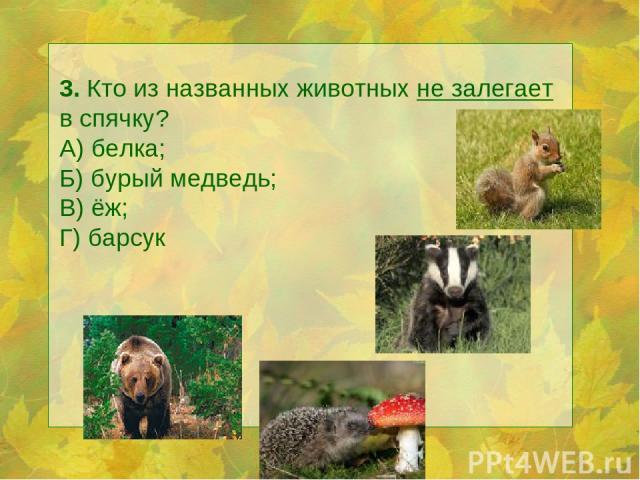 3. Кто из названных животных не залегает в спячку? А) белка; Б) бурый медведь; В) ёж; Г) барсук