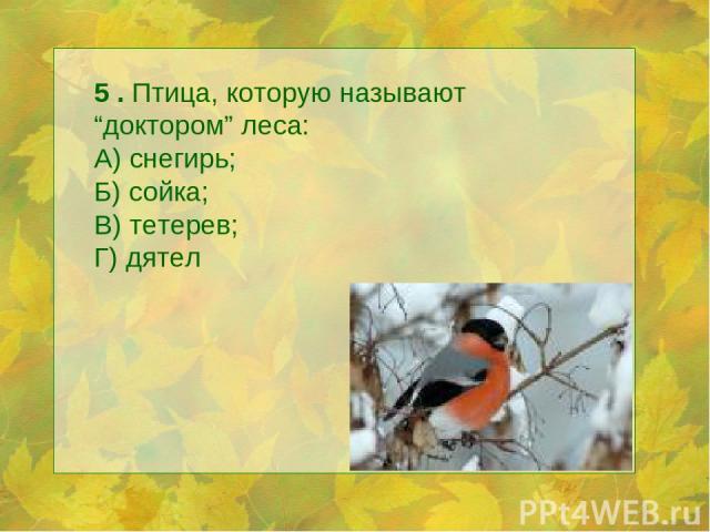 """5 . Птица, которую называют """"доктором"""" леса: А) снегирь; Б) сойка; В) тетерев; Г) дятел"""
