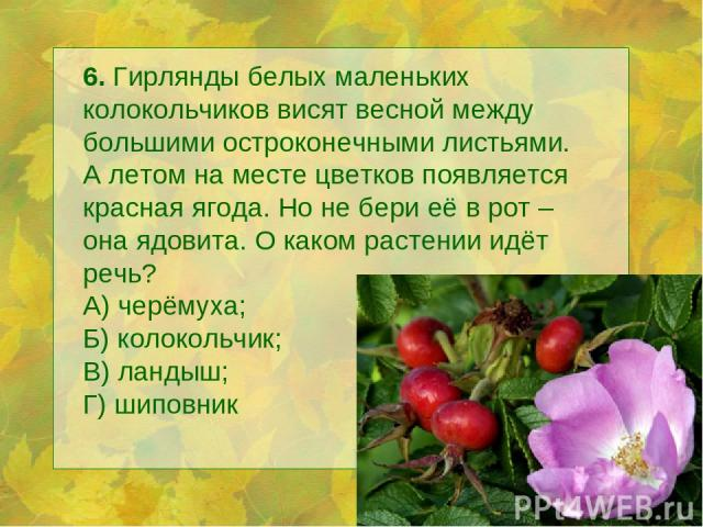 6. Гирлянды белых маленьких колокольчиков висят весной между большими остроконечными листьями. А летом на месте цветков появляется красная ягода. Но не бери её в рот – она ядовита. О каком растении идёт речь? А) черёмуха; Б) колокольчик; В) ландыш; …