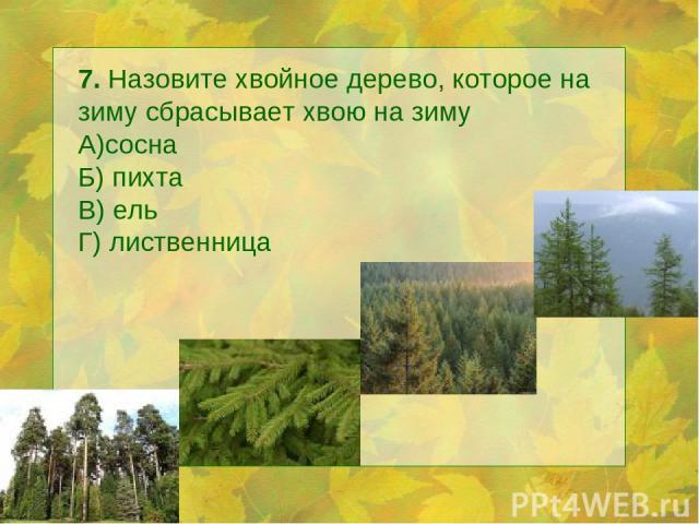 7. Назовите хвойное дерево, которое на зиму сбрасывает хвою на зиму А)сосна Б) пихта В) ель Г) лиственница