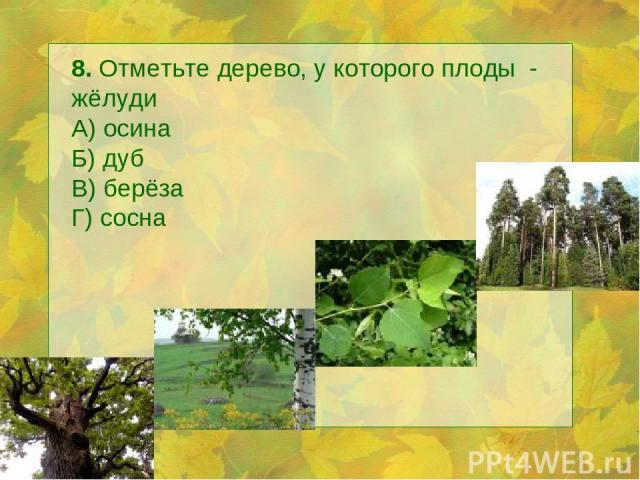 8. Отметьте дерево, у которого плоды - жёлуди А) осина Б) дуб В) берёза Г) сосна