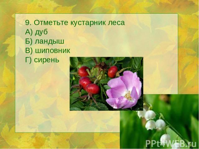 9. Отметьте кустарник леса А) дуб Б) ландыш В) шиповник Г) сирень